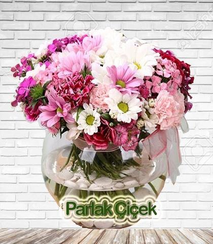 Arajman Çiçek