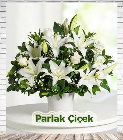 Beyaz Arajman Çiçek