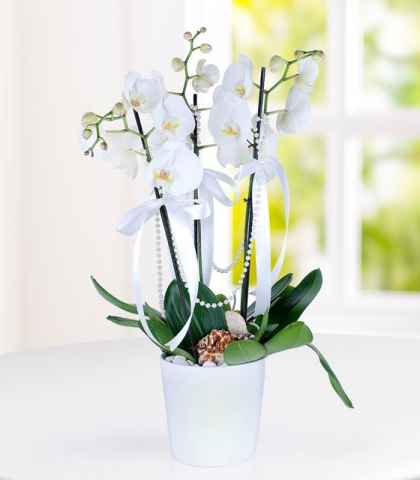3 Dal Orkide