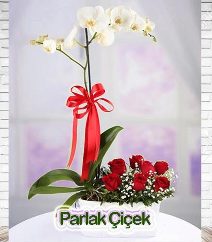 Orkide Tek li Kırmızı Gül